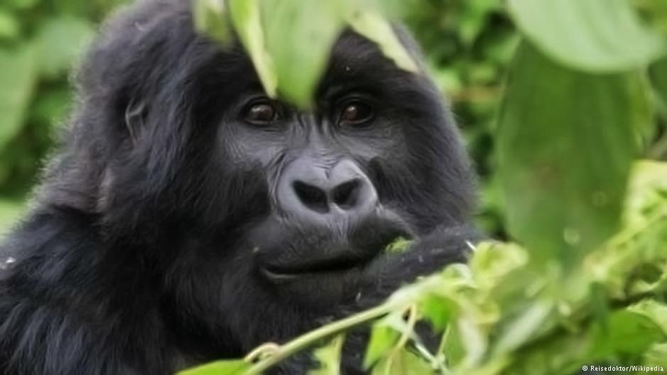 UN zaštita divljih vrsta