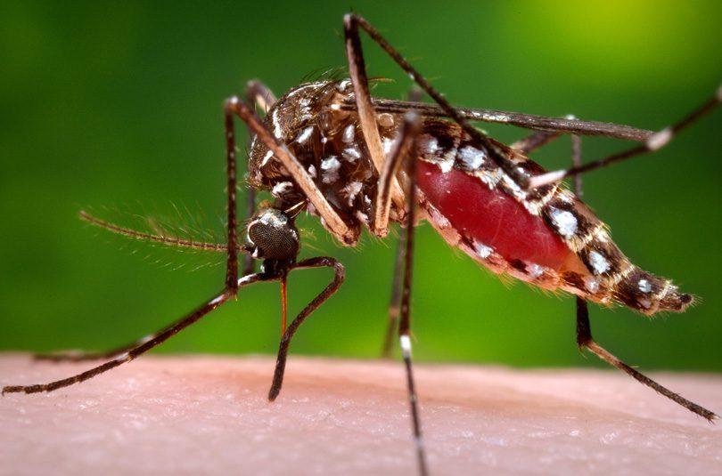 zika-komarac