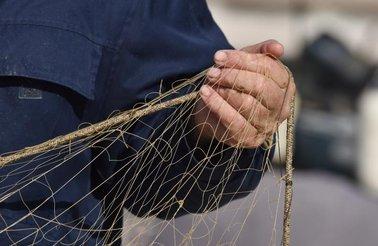 Biograd mreže